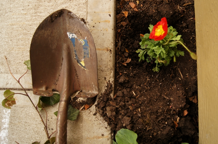 tools & flowers | cameraLinz